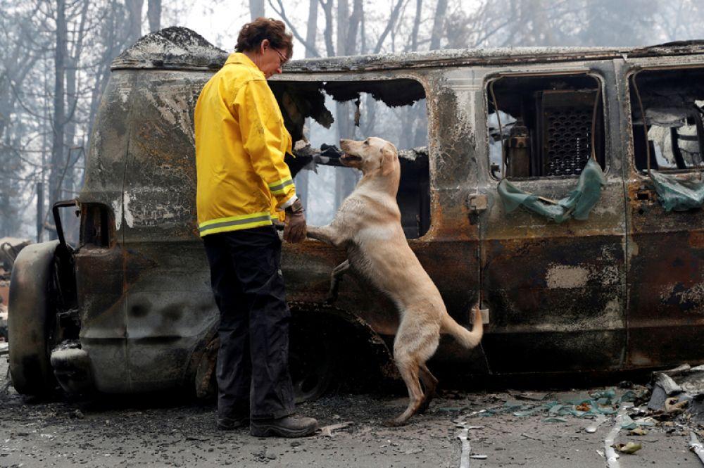 Карен Аткинсон со своей собакой по кличке Эхо после пожаров в городе Парадайз, Калифорния.