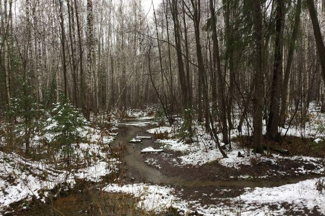 В Оренбургской области в выходные дни будет комфортная погода.