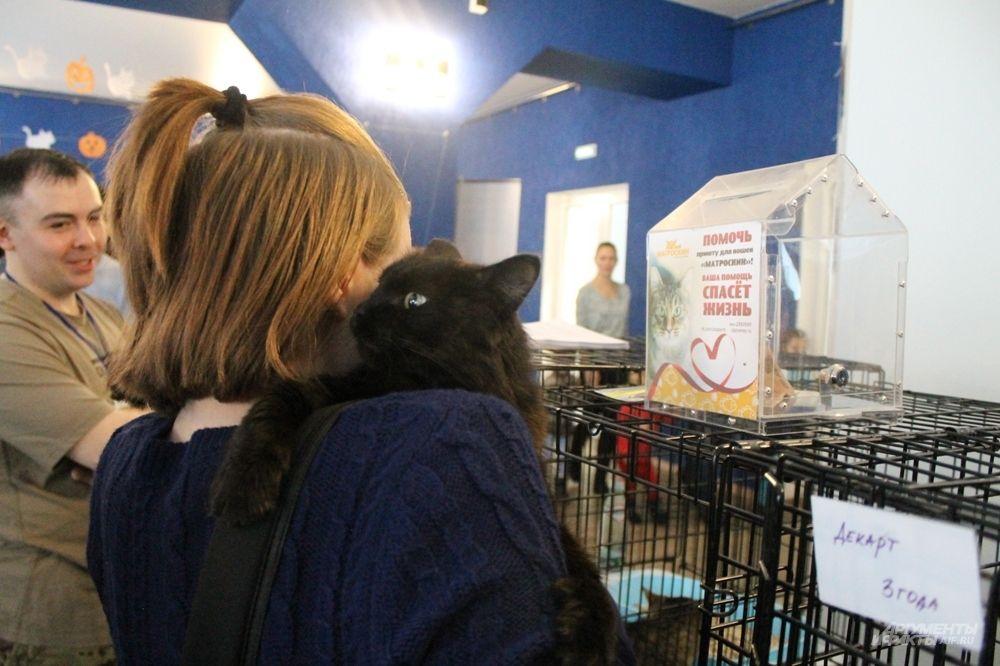 Кошка запрыгнула на посетительницу, которая ее гладила.