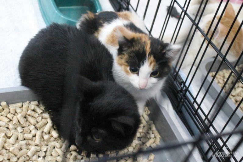Котята жмутся друг к другу.