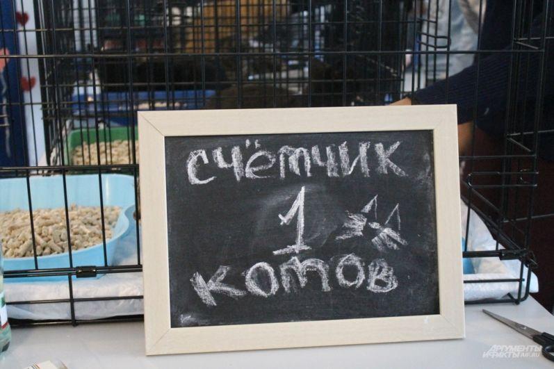 Через несколько минут после начала выставки забрали первого котика