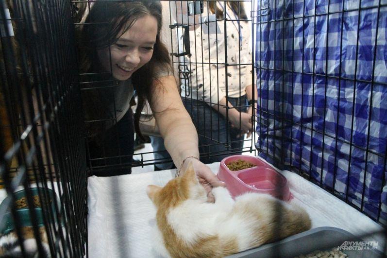 Посетители гладят котиков.