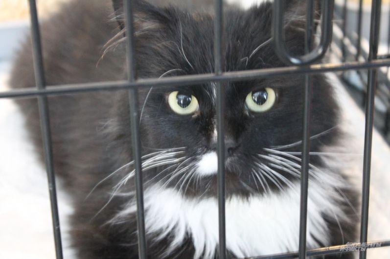 В выставке принимали участие 20 котиков.