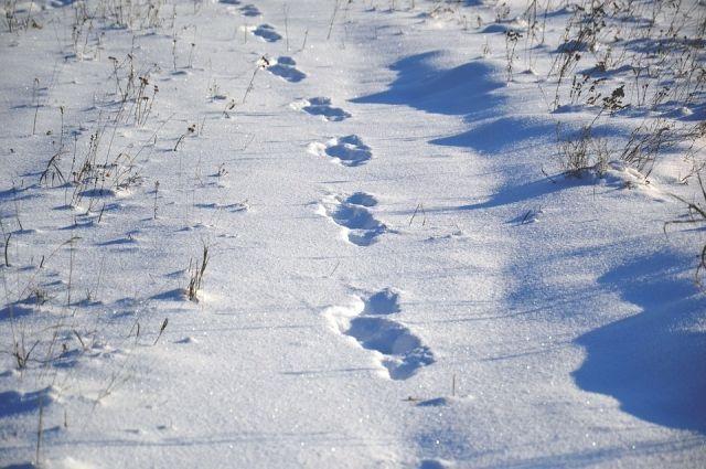 На следующей неделе в регионе установится по-настоящему зимняя погода.