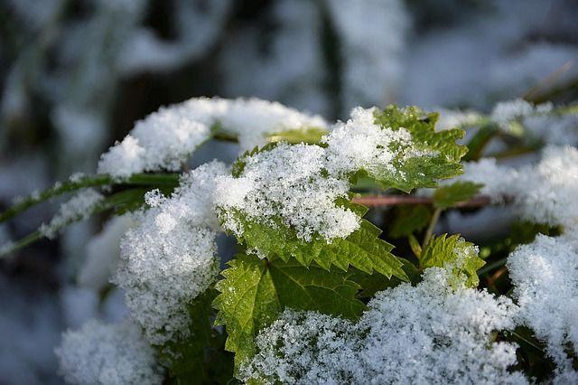 Лишь в северных областях будет сухо и без осадков, в остальных регионах стоит готовиться к дождю с мокрым снегом.