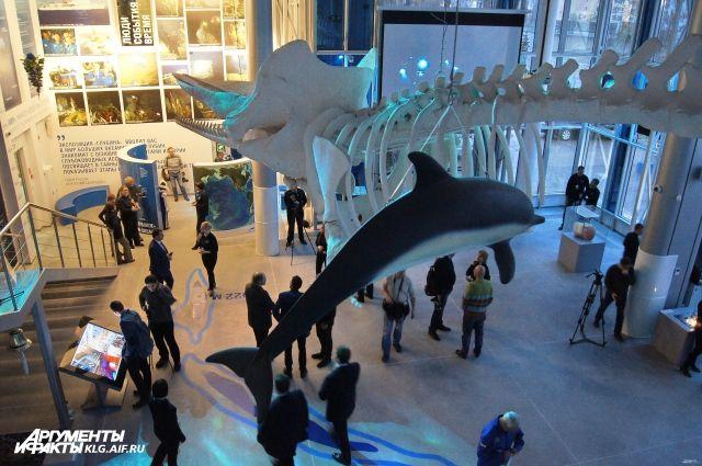 24 ноября в Музей Мирового океана посетителей пустят без билета.