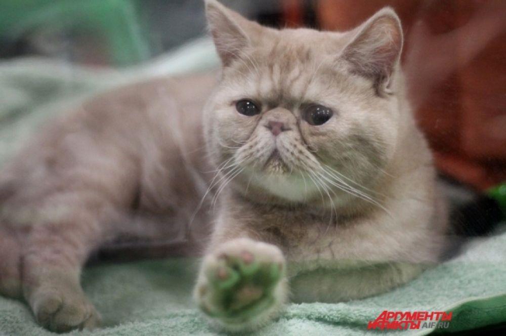 У всех котят очень симпатичные мордочки. Они любят человеческое внимание, ласку и нежность.