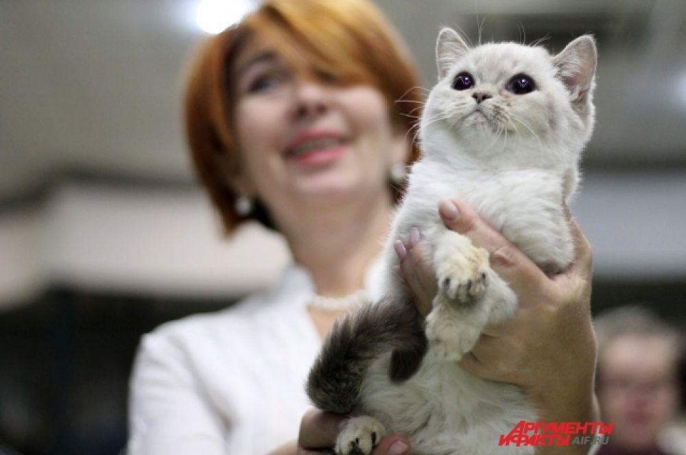 Котята хорошо чувствуют заботу и любовь.