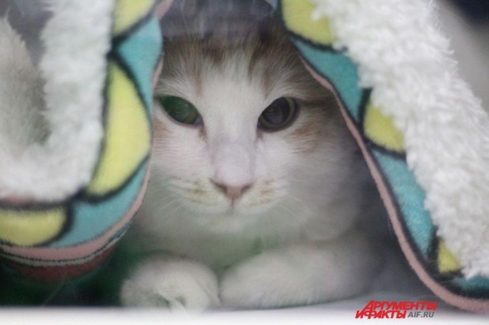 Вот, например, грустного вида котёнок, но от этого не менее милый.