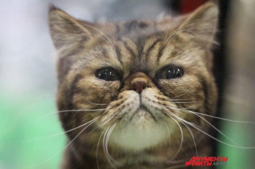 Посмотрите, какой выразительный взгляд у этого котенка.