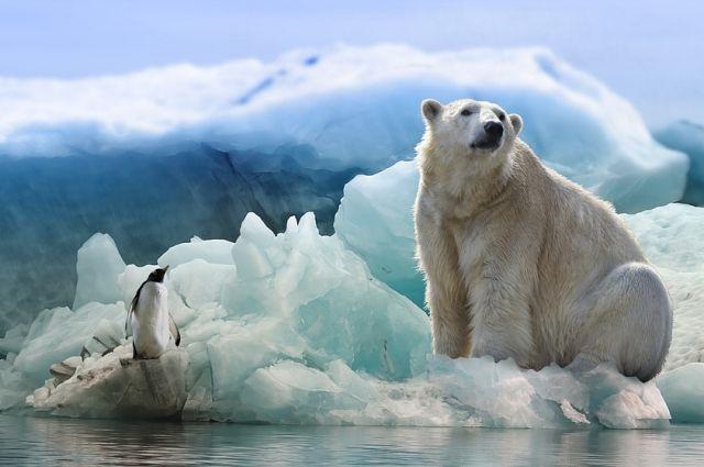 Тюменцы встретятся с известным полярником
