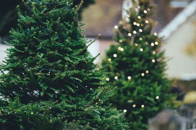 В Салехарде установят пять новогодних елей