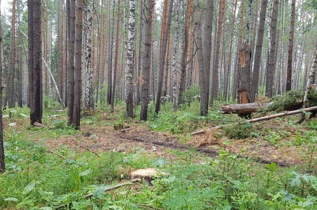 Сохранение лесов края - первостепенная задача