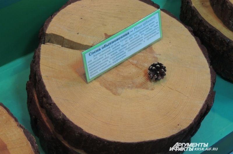 Возраст дерева считают по годичным кольцам.