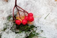 Ночью с 20 на 21 ноября и днём 21 ноября на дорогах Удмуртии ожидается гололедица, днем снежные заносы. Об этом сообщили республиканском гидрометцентре.