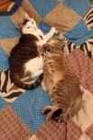 5. Коты Гера и Рыся