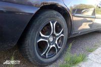 В Калининграде бродячие псы повредили припаркованные машины.