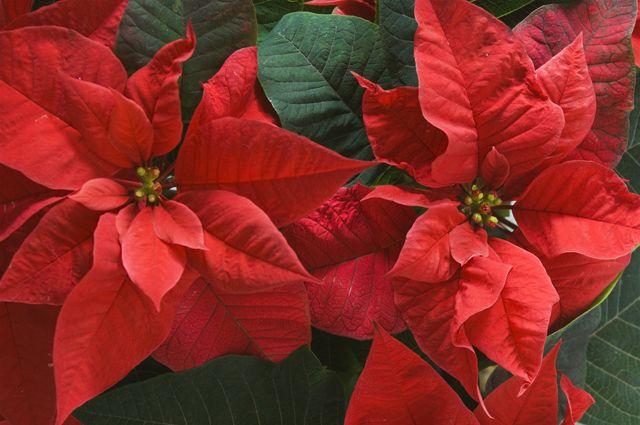 6435019a4f59 Живые подарки. Чем порадовать любителей комнатных растений    Цветы ...