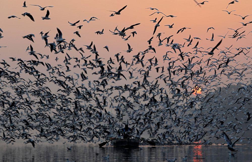 Ранее утро на реке Джамна в Нью-Дели, Индия.