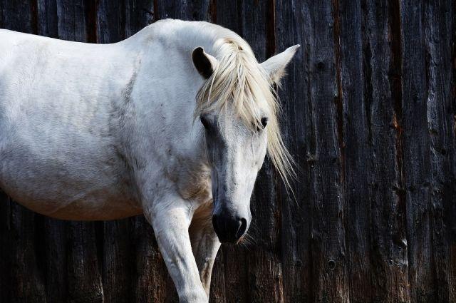 На трассе Калининград-Мамоново автоледи въехала в табун лошадей.