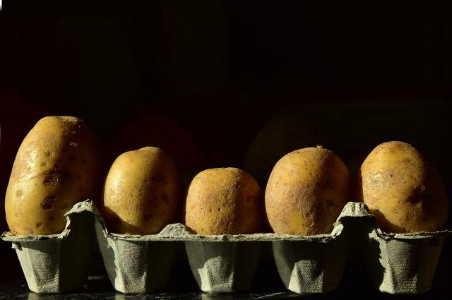 Новый сорт картофеля назвали
