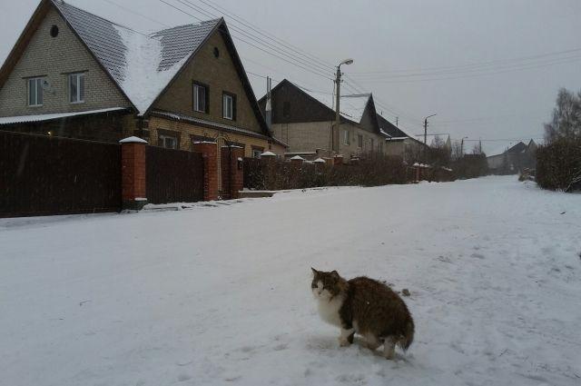 На следующей неделе морозы в Архангельской области усилятся.