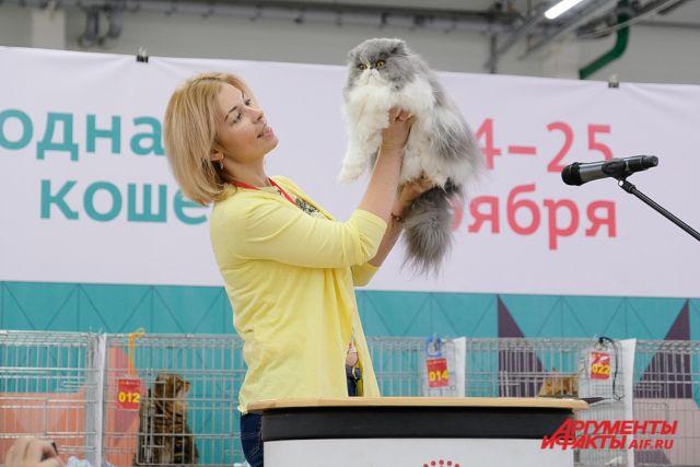 Выставка кошек в Перми.