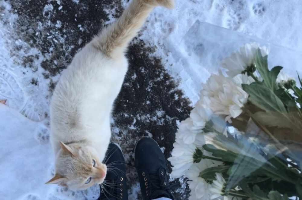 Кот Снежок