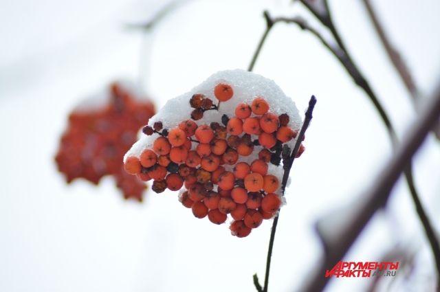 В целом температурный фон в Прикамье существенно ниже нормы: на 2–3 градуса по южным районам и до 6–8 градусов по северным.