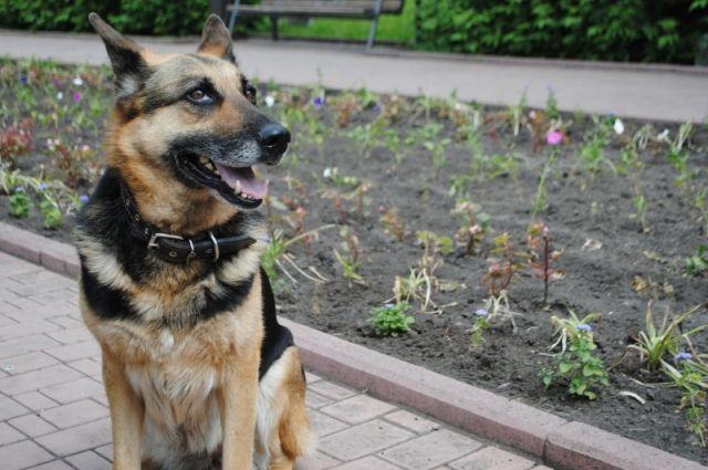 Инцидент произошел в августе, собака гуляла без намордника и поводка.