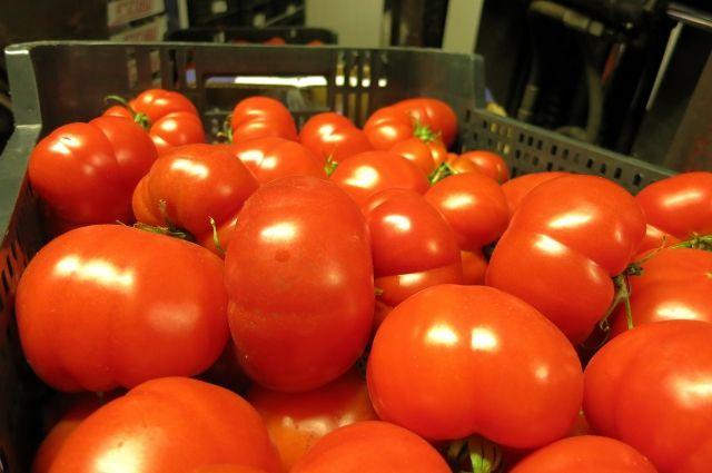 В Калининград не пустили около 4 тонн зараженных томатов из Македонии.