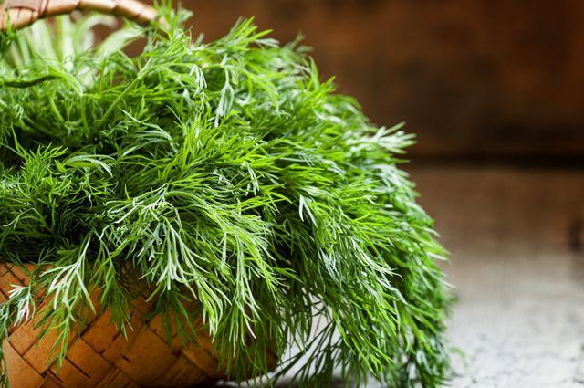 Как приготовить настои от бессонницы из укропа и полыни?