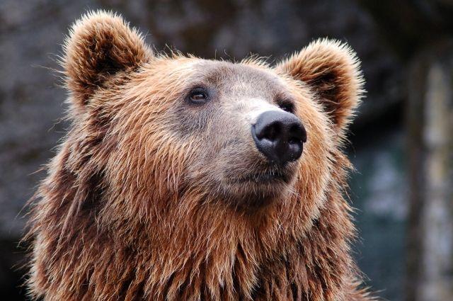 Прокопчанин держит медвежонка в гараже.