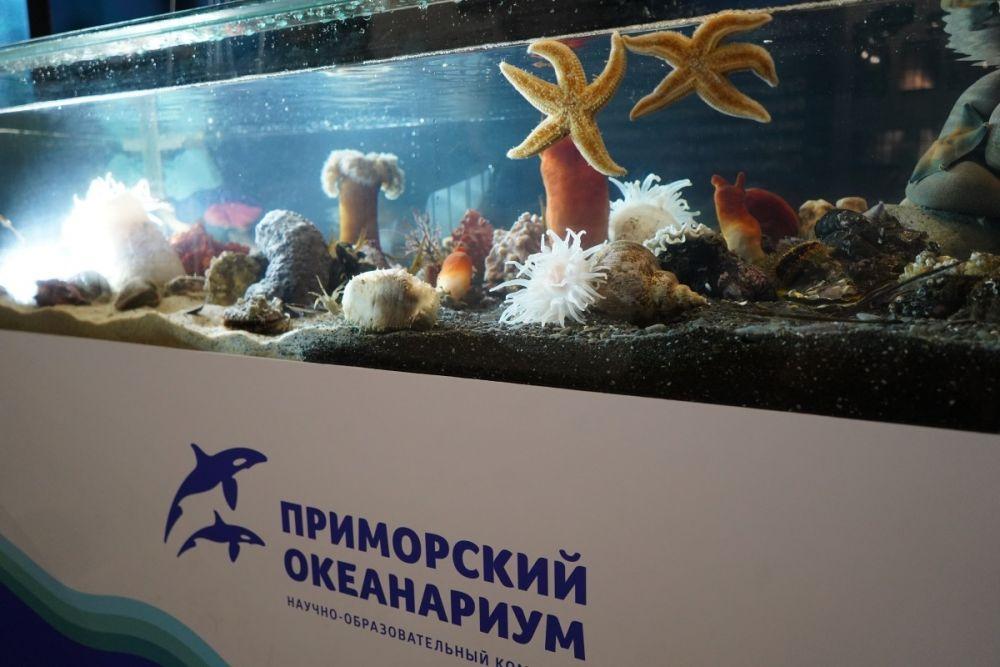 Президентский океанариум на Русском – один из лучших в мире