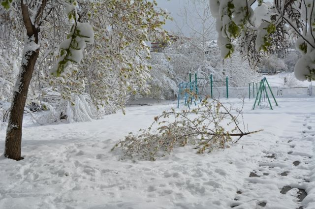 На юге Тюменской области 29 ноября ожидается снегопад