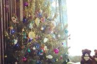 Некоторые иркутяне в качестве новогоднего дерева предпочитают сосну.