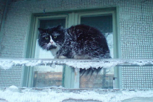 Грядущие холода тревожат и людей, и домашних любимцев.