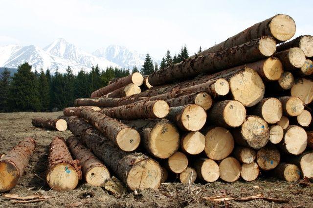 В Кваркенском районе вырубили лес на 4,6 млн.рублей.