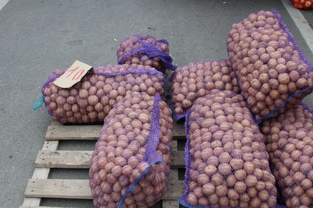 Овощеводы считают, что посредников при реализации такой продукции нужно свести к минимуму.