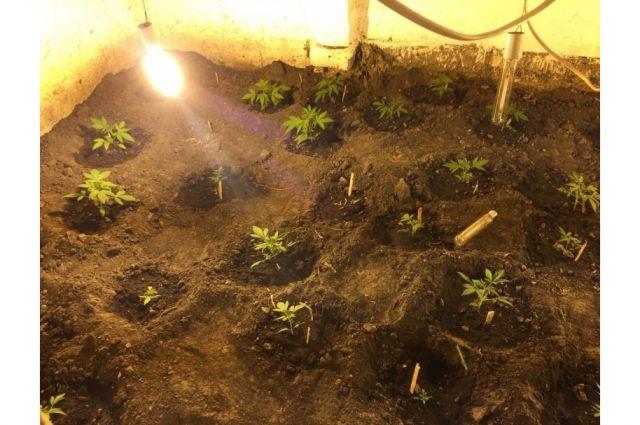В Комсомольском районе суд вынес приговор обвиняемому за незаконное культивирование и хранение наркосодержащих растений.