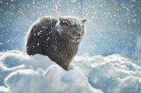 30 ноября: день домашних животных, приметы о погоде, церковный праздник