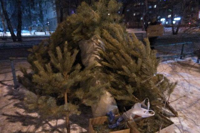 Новогоднее дерево: какое наказание предусмотрено за незаконную вырубку елок