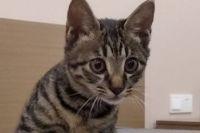 Котенку ищут попутчика, летящего из Китая в Новосибирск