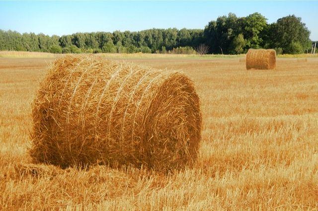 Мужчина украл 26 тюков сена