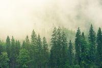 МЧС: в Оренбуржье на выходных ожидается туман и изморозь