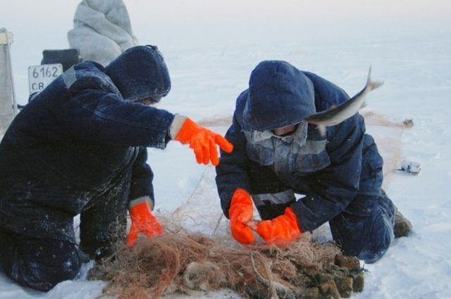 Житель Тобольска выловил несколько рыбин из Красной книги России