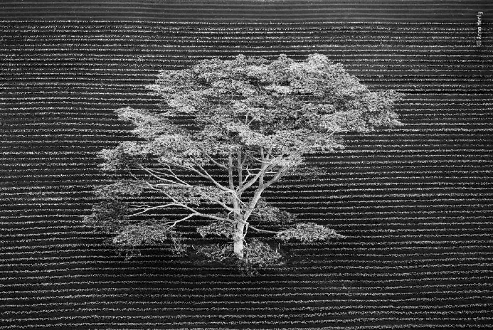 Дерево на краю тропического леса на острове Кауаи, Гавайи.