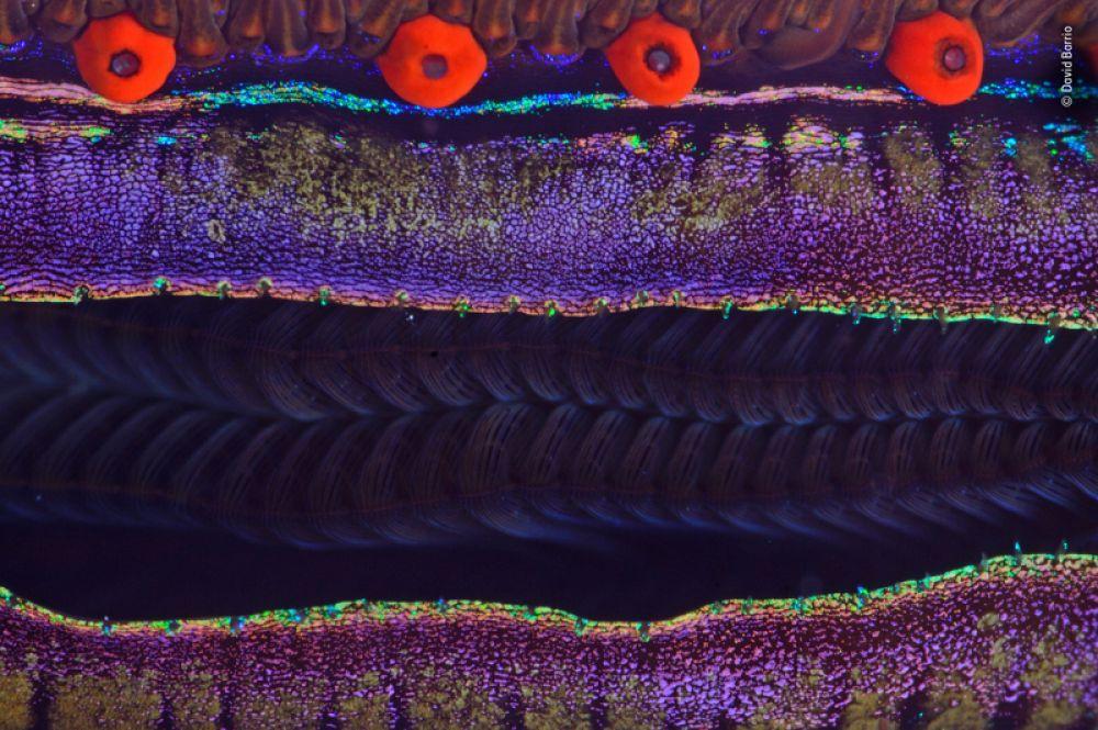 Моллюски среди кораллов в Красном море, макросъемка.