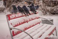 30-градусные морозы задержатся в Новосибирске.
