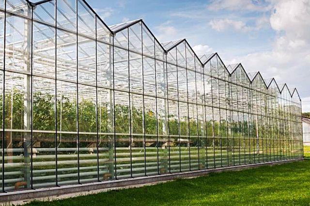Новый тепличный комплекс оснастят системой автоматизированного управления микроклиматом и питанием растений.